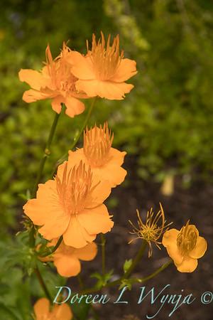 Amy Whitworth - Debolock garden_309