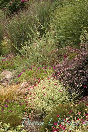 Lucy & Susan - Letson garden_721