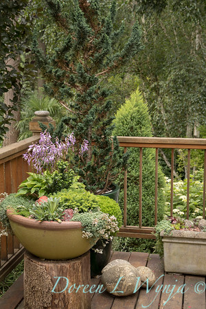 Marcia Peck - Marcia's garden_615