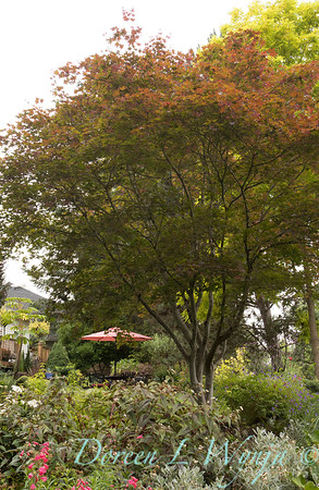 Marcia Peck - Marcia's garden_610