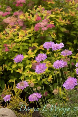 Marcia Peck - Schmitt garden_516