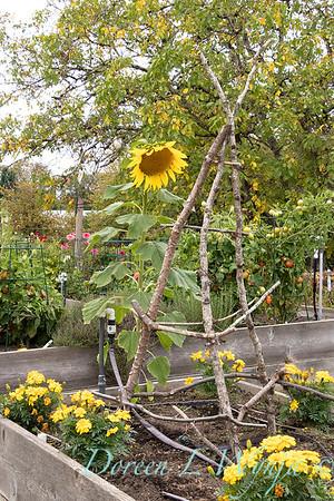 Perennial Partners design Windyhill Farm_712
