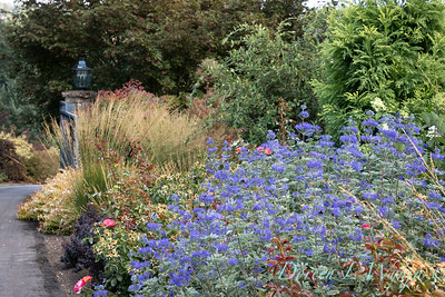 Perennial Partners design Windyhill Farm_744
