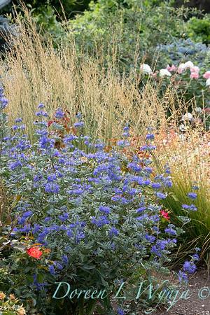 Perennial Partners design Windyhill Farm_703