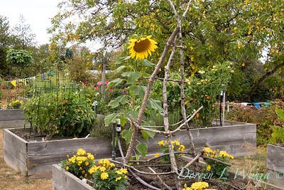 Perennial Partners design Windyhill Farm_711