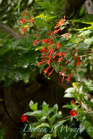 Ann & Greg's Garden_118