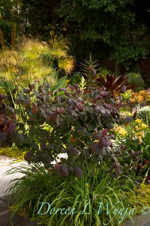 Ann & Greg's Garden_122