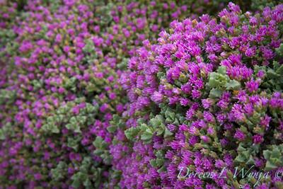 Ann & Greg's Garden_168