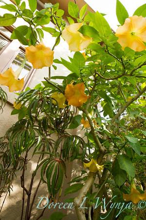 Ann & Greg's Garden_132