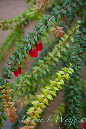 Ann & Greg's Garden_153