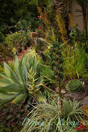 Ann & Greg's Garden_101