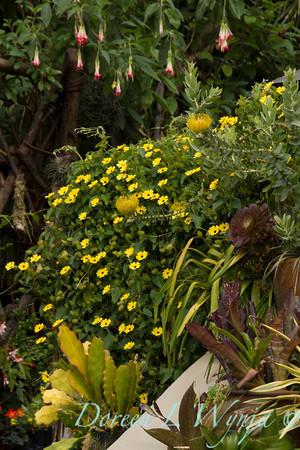 Ann & Greg's Garden_121