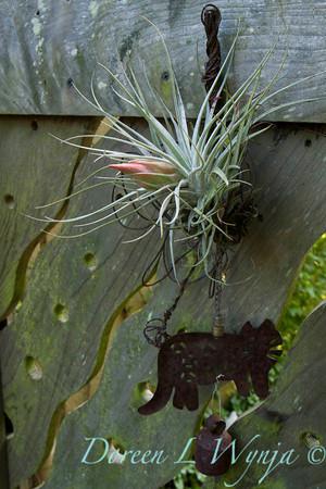 Ann & Greg's Garden_147