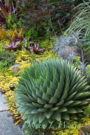 Ann & Greg's Garden_106