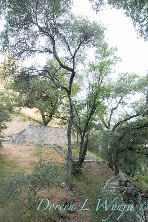 Quercus - stone walkways_4456