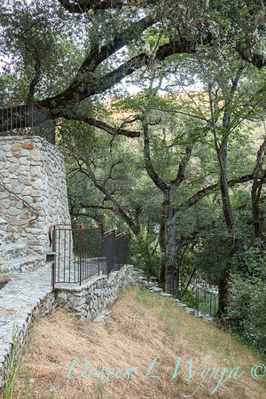 Quercus lobata - Q agrifolia - stonework walkway_4558