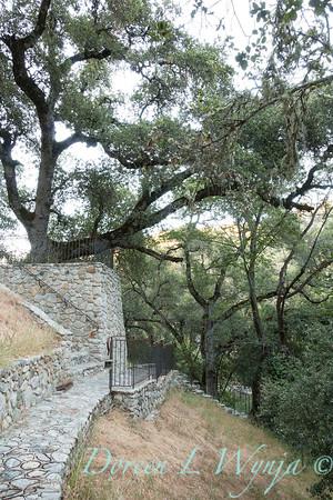 Quercus lobata - Q agrifolia - stonework walkway_4560