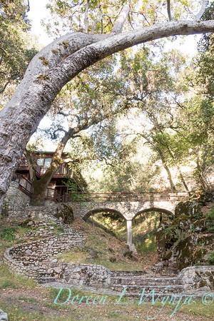 Platanus racemosa - Quercus agrifolia - Q lobata - stonework_4461