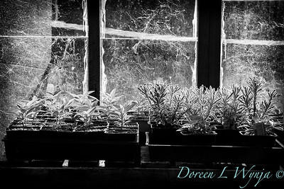 into the potting shed_1103