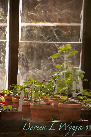 into the potting shed_1104