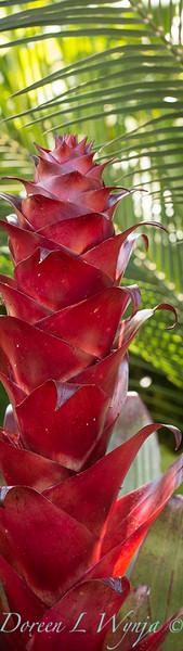 Alcantarea imperialis Rubra flower spike - Macrozamia communis_0586