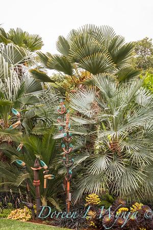 Chamaerops humilis var  cerifera - crab claw tree sculpture - tropical landscape_0684