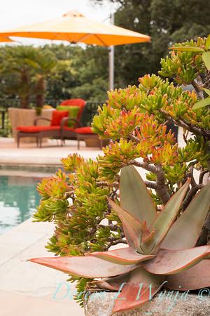Aloe striata - Crassula ovata 'ET Fingers' - poolside planter_0796