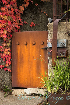 Parthenocissus tricuspidata 'Veitchii' - rusted mailboxes - entry gate_0382