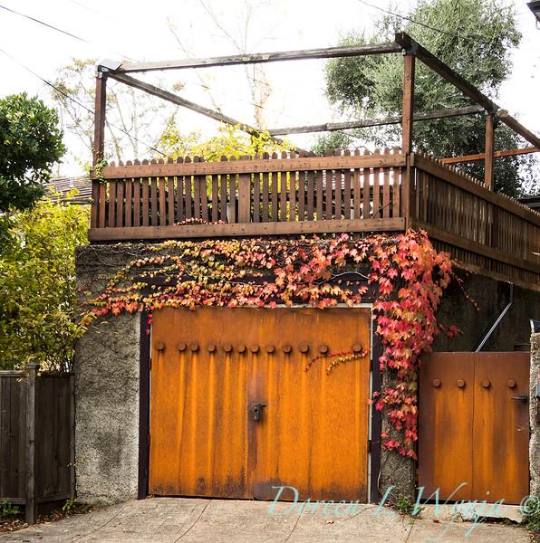 Parthenocissus tricuspidata 'Veitchii' - Rusted garage doors_0347