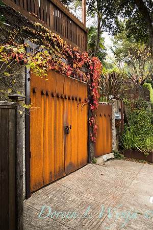 Parthenocissus tricuspidata 'Veitchii' - Rusted garage doors_0357