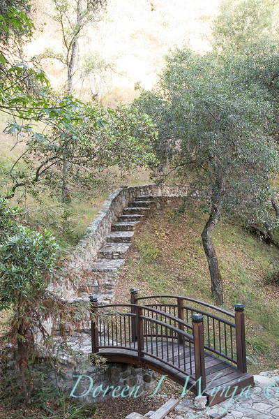 Quercus agrifolia - stonework steps and bridge_4479