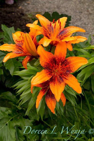 Lilium Orange Art_002