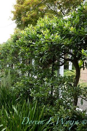 Lisa Bauer - designer's garden_1240
