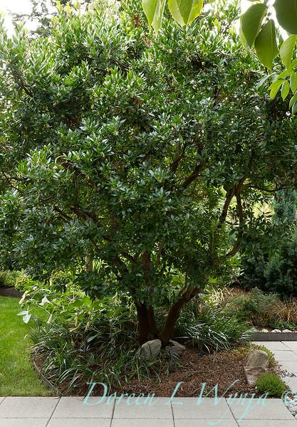 Lisa Bauer - designer's garden_1216