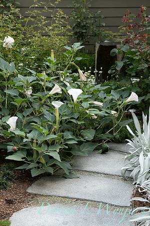 Lisa Bauer - designer's garden_1230