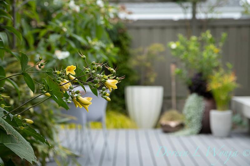 Lisa Bauer - designer's garden_1290