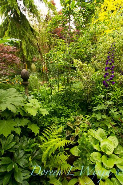 Shade Garden_7825