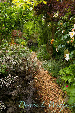 Cottage Garden_7486