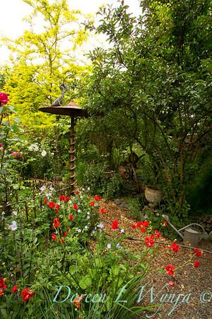 Cottage Garden_7827