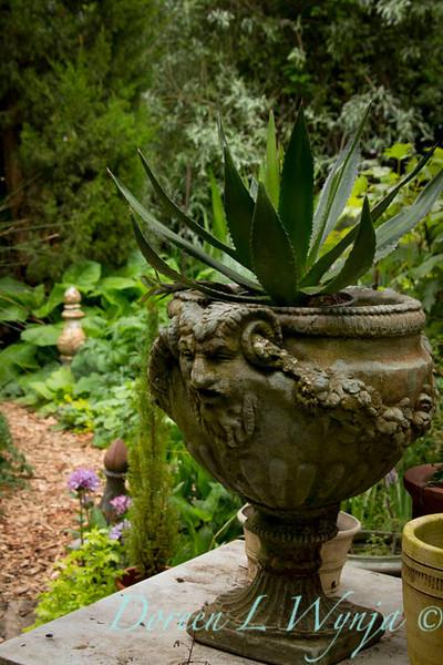 Aloe in urn_001