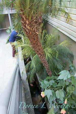 Debra's Vertical Garden_6008