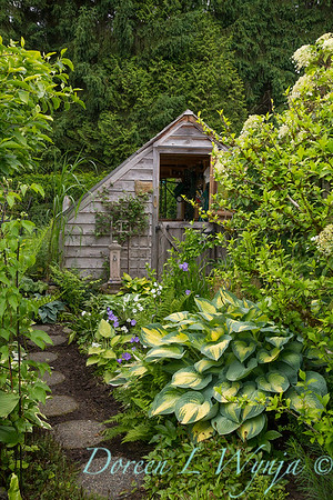 Hosta potting shed_0394