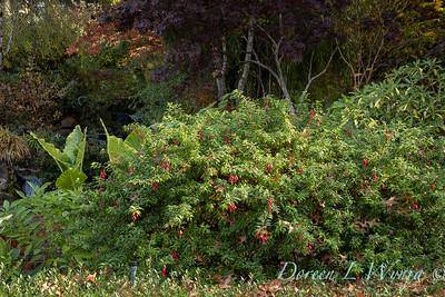 Dietrick fall garden_2043