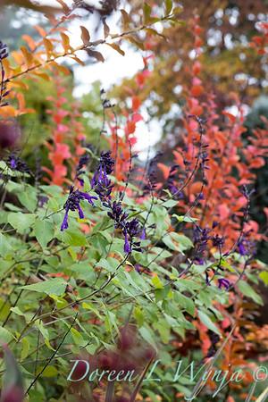 Dietrick fall garden_2017
