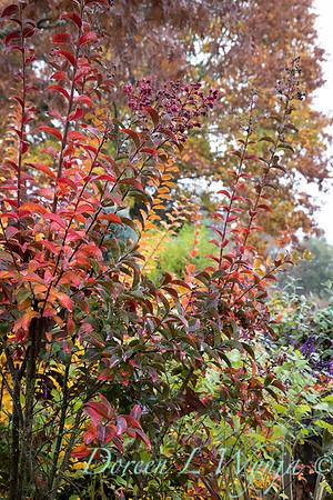Dietrick fall garden_2018