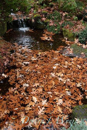 Dietrick fall garden_2015