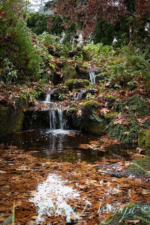 Dietrick fall garden_2014
