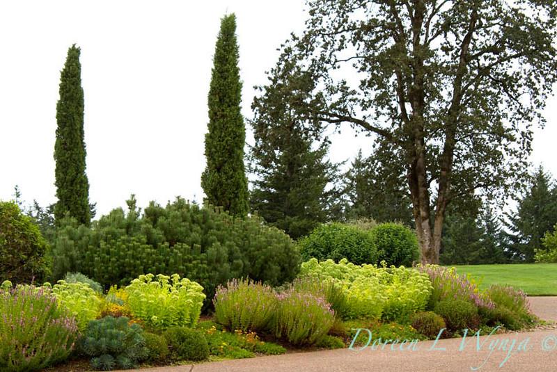 Sedum Evergreen Landscape_002