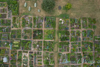 Aerial view Fulton Community Garden_1843