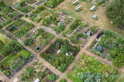 Aerial view Fulton Community Garden_1849